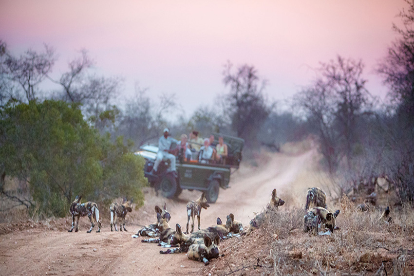 Tanda Tula Safari Camp - wild dogs in the Greater Kruger National Park
